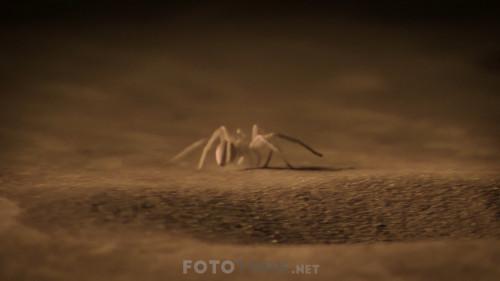 Night-On-Earth---Dunya-da-Gece-S01E02-Mehtapli-Duzlukler.mkv_snapshot_35.57.275.jpg